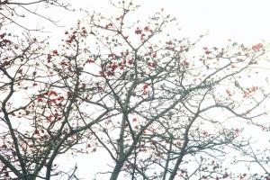 Chùm thơ của Nhà thơ Nguyễn Thế Hùng
