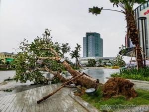 Bão số 2 đổ bộ - hạ gục hàng loạt cây xanh tại thành phố Hà Tĩnh