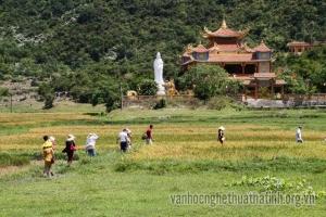 Bút ký: Bí ẩn ở Cù Lao Chàm