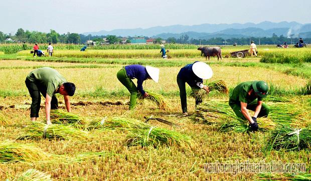 Công an Hương Sơn giúp dân gặt lúa tránh bão!