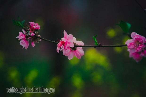 Thơ thiếu nhi chọn lời bình: Hát với mùa xuân