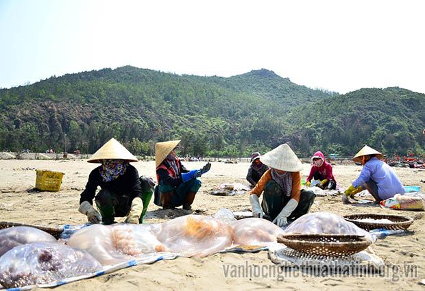 Chùm ảnh mùa sứa ở biển Thịnh Lộc
