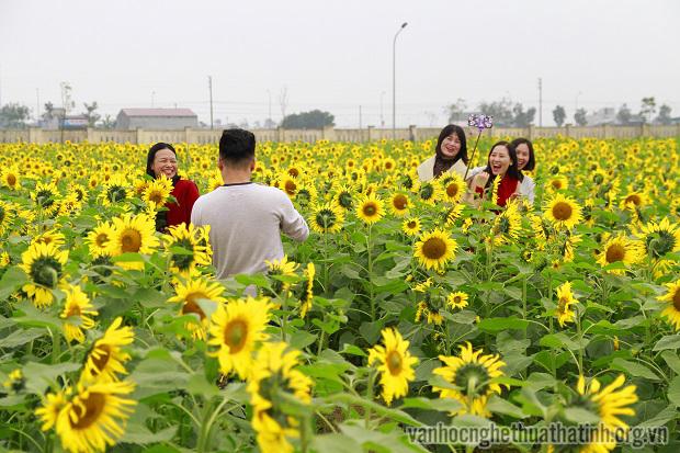 Rực rỡ đồng hoa mặt trời Hà Tĩnh
