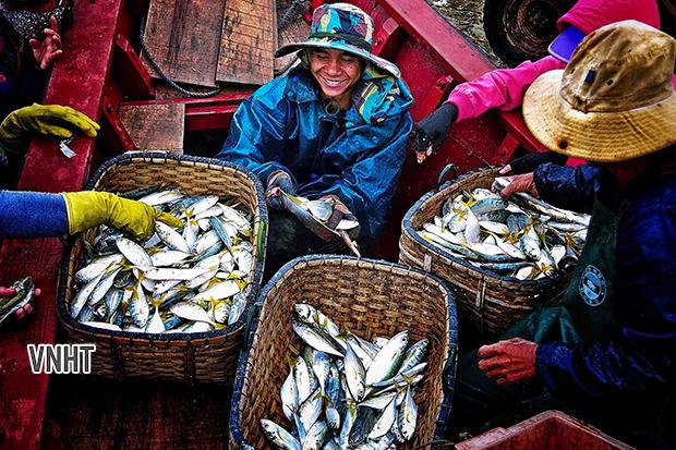 Làng cá Xuân Hội - Tạp chí Hồng Lĩnh