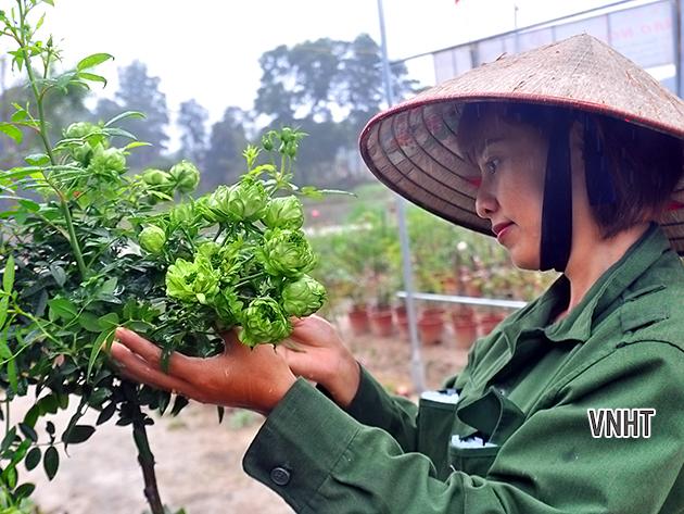 Thầy Thích Ngộ Lực và câu chuyện gần 4 vạn cây hoa phục vụ dịp Tết Nguyên Đán