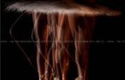 Việt Nam giành 4 giải tại Cuộc thi ảnh nghệ thuật quốc tế lần thứ 9