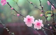 Xuân Diệu và mùa xuân