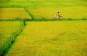 Bút ký dự thi LÀNG TÔI - NHỮNG NGÀY THÁNG KHÔNG QUÊN của Đinh Sỹ Minh